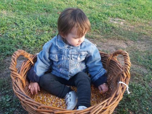 Kukoricafosztás - 2018.09.29.