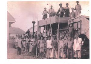 Cséplőmunkások 1950-es évek